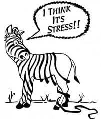 relieve stress at Advance Upper Cervical chiropractic Walnut Creek CA